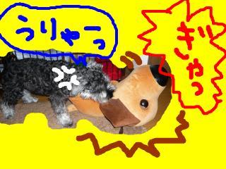 snap_jirokkosan_2008103235251.jpg