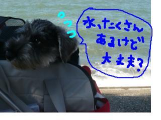 snap_jirokkosan_200810403730.jpg