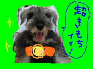 snap_jirokkosan_20081040647.jpg