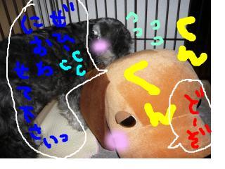 snap_jirokkosan_200890233223.jpg