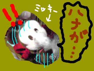 snap_jirokkosan_200890234928.jpg