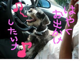 snap_jirokkosan_200894181142.jpg