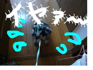snap_jirokkosan_200894181615.jpg
