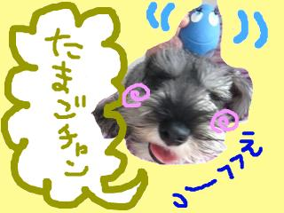 snap_jirokkosan_20089418221.jpg