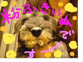 snap_jirokkosan_200895203315.jpg