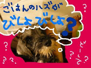 snap_jirokkosan_200895204326.jpg