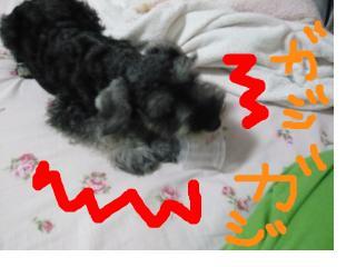 snap_jirokkosan_200896115334.jpg