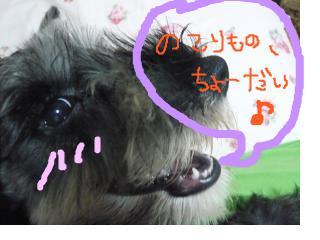 snap_jirokkosan_200896115729.jpg