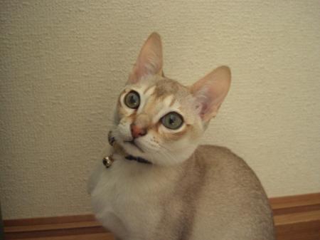 jiru+024_convert_20090326171836.jpg