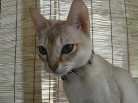 jiru+074_convert_20090314160152.jpg