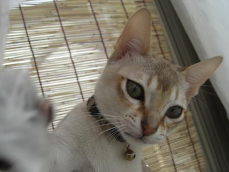 jiru+094_convert_20090314160913.jpg