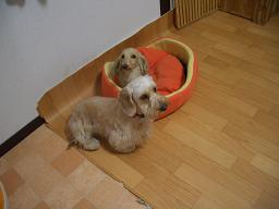 201103198.jpg