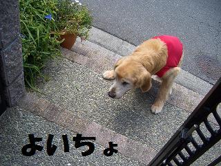 201107157_20110720143452.jpg