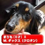 marimo120105.jpg