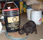 犬ネコ用自動エサ箱