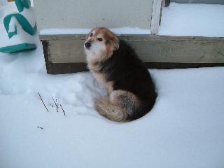 雪の中のチビ