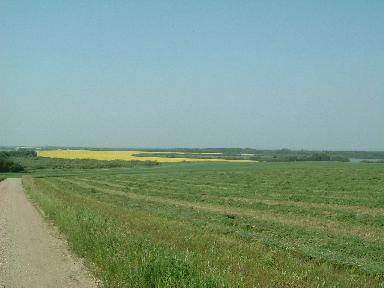 アルファルファの畑