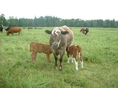 二匹にミルクをやるバンビ