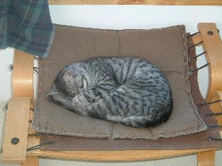 窓の近くで眠るブラッキー
