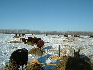 牛の餌01232008