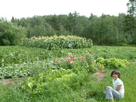 菜園08142008