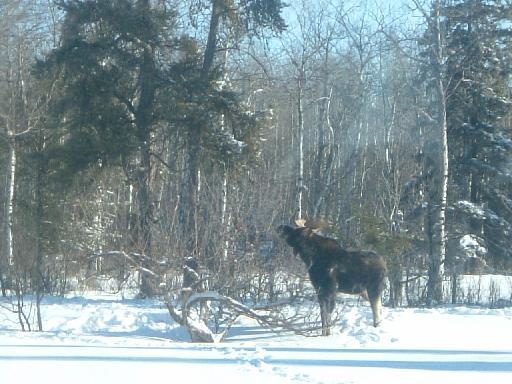 moose101302008