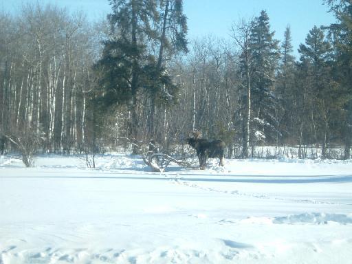 moose201302008