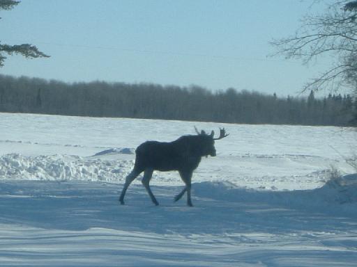 moose301302008