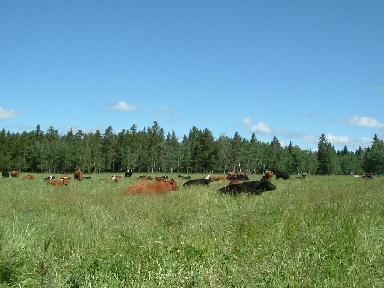 pasture06272007