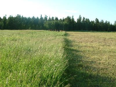 放牧地その2