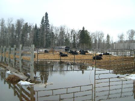 子牛の柵04112008