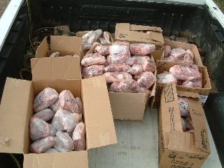 トラックに積んだ豚肉