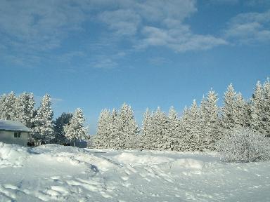 雪景色01132008