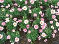 4丁目交差点のお花