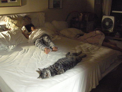 kids&cat