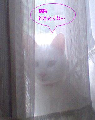 カーテン裏090707