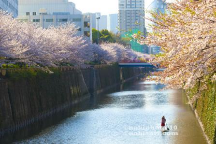 20100408_Sakura_SUP_V1503.jpg