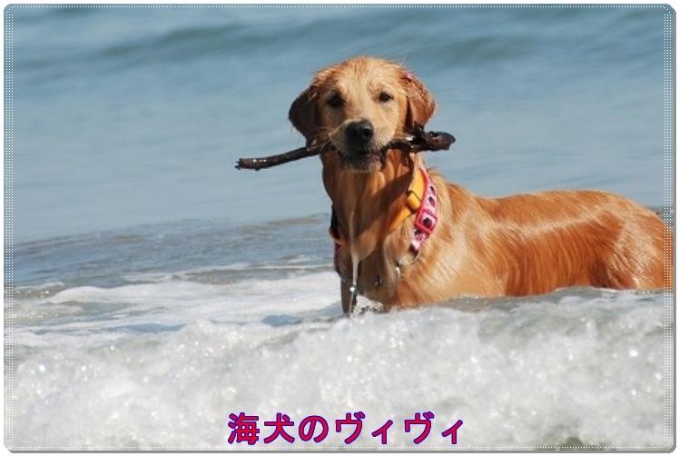 海犬のヴィヴィ