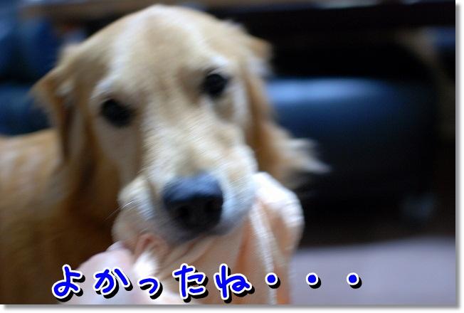 DSC_0003 - コピー