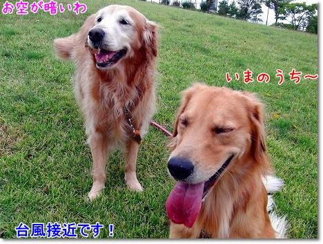 CIMG0168_20101029194803.jpg