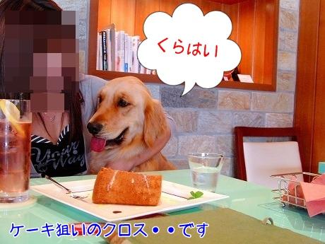 CIMG0782.jpg
