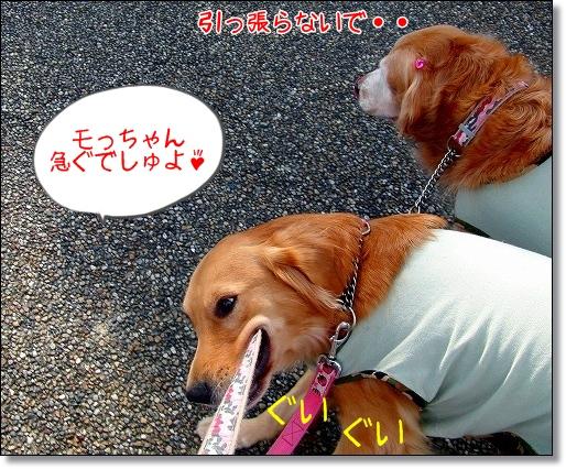 CIMG0957.jpg
