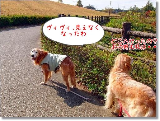 CIMG0984.jpg