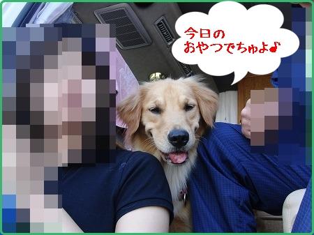 CIMG6681.jpg