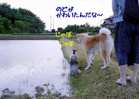 CIMG6701.jpg