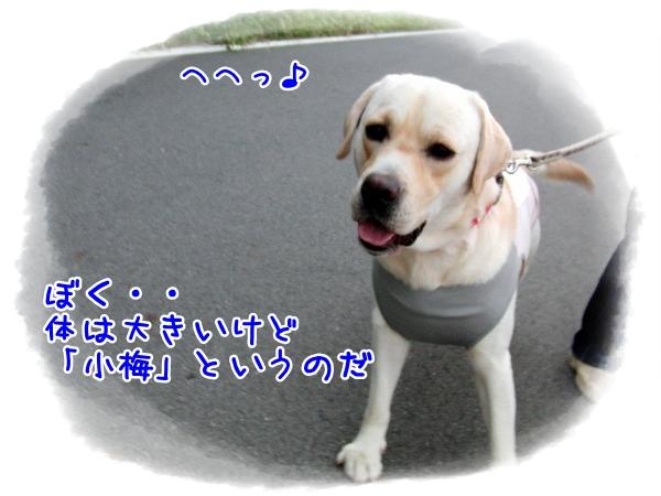 CIMG9249_20110526203312.jpg