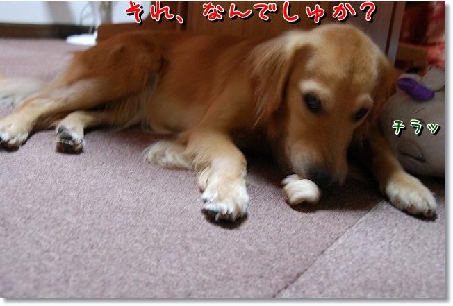 DSC_0002_20111006195912.jpg