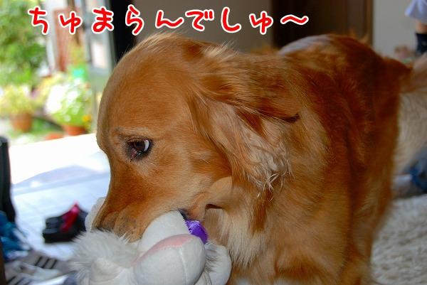 DSC_0003_20110509005306.jpg