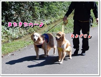 DSC_0003_20110925002743.jpg