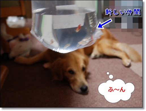 DSC_0003_20111006195912.jpg